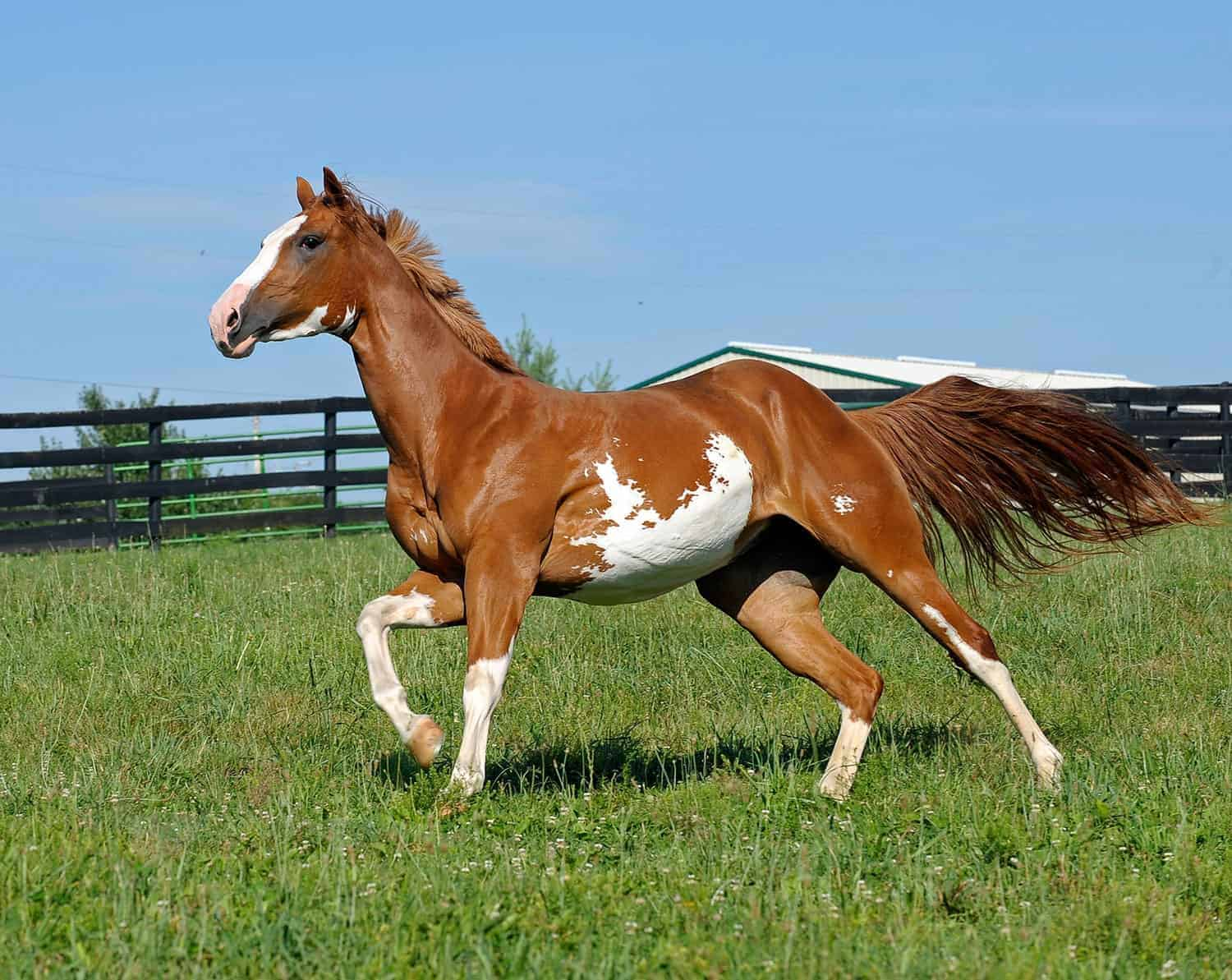 Horses: Five Important Facts About Them
