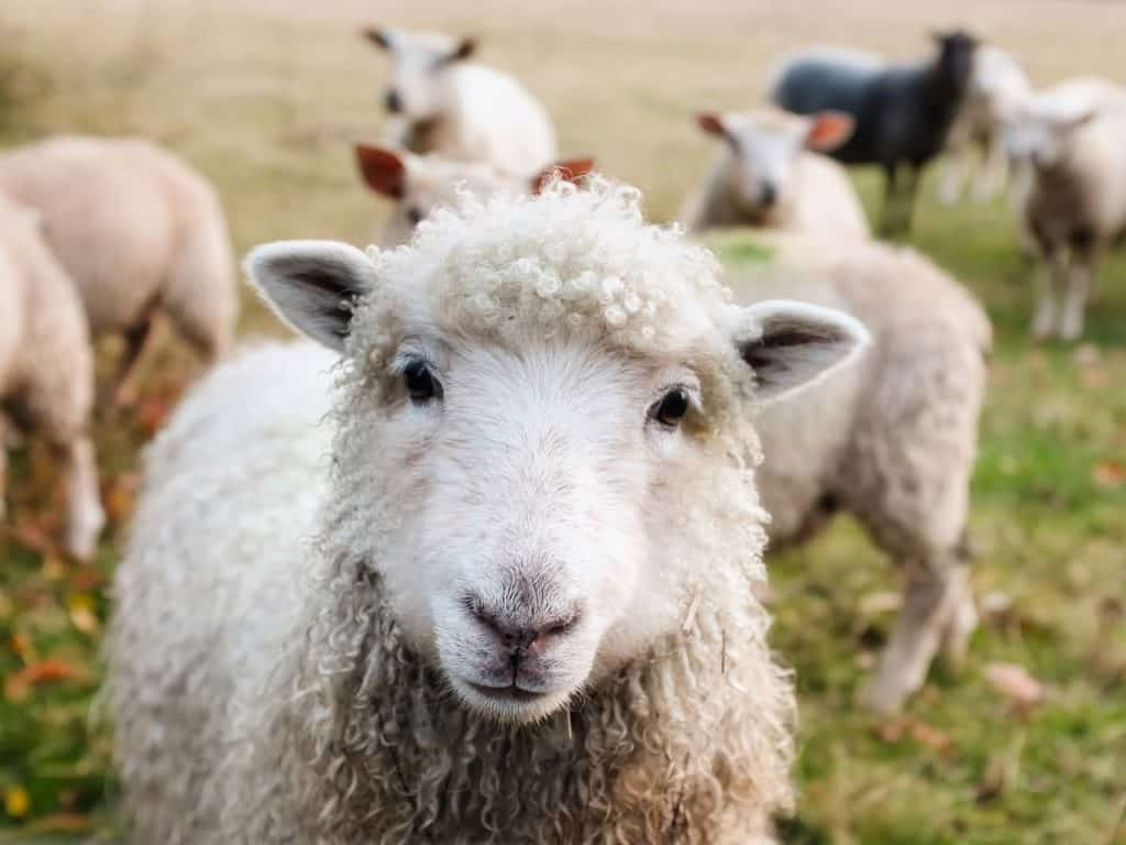Most Interesting Facts About Animals Found In Animal Farms