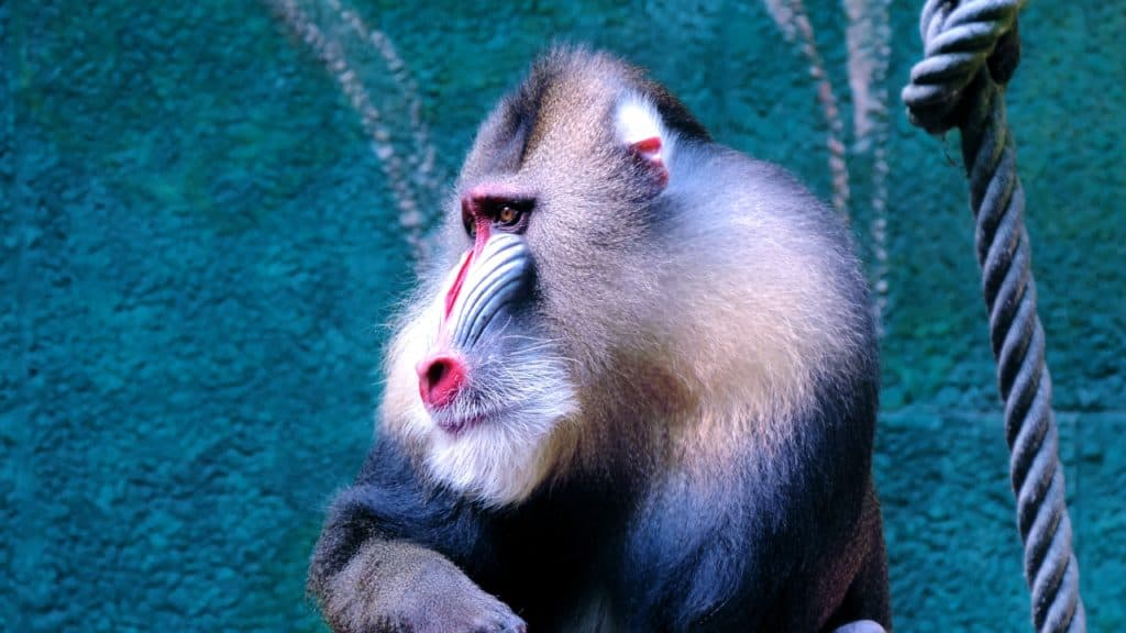 Interesting Eye-Opening Facts About Monkeys