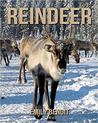 Reindeer: Amazing Pictures & Fun Facts on Animals in Nature (Paperback) Emily Benoit