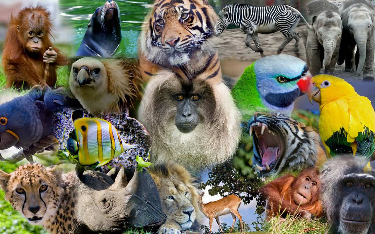 5 Most Endangered Species You Should Know