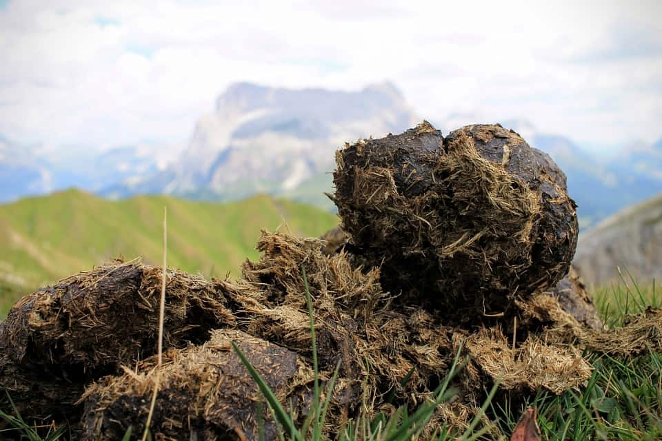 5 Books of Facts About Animal Poop: What We Don't Know About This Stuff