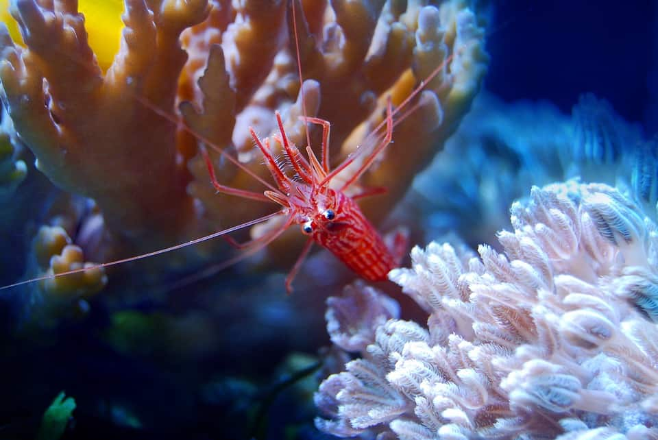 Facts About Shrimps: 5 Books All About These Decapod Crustaceans