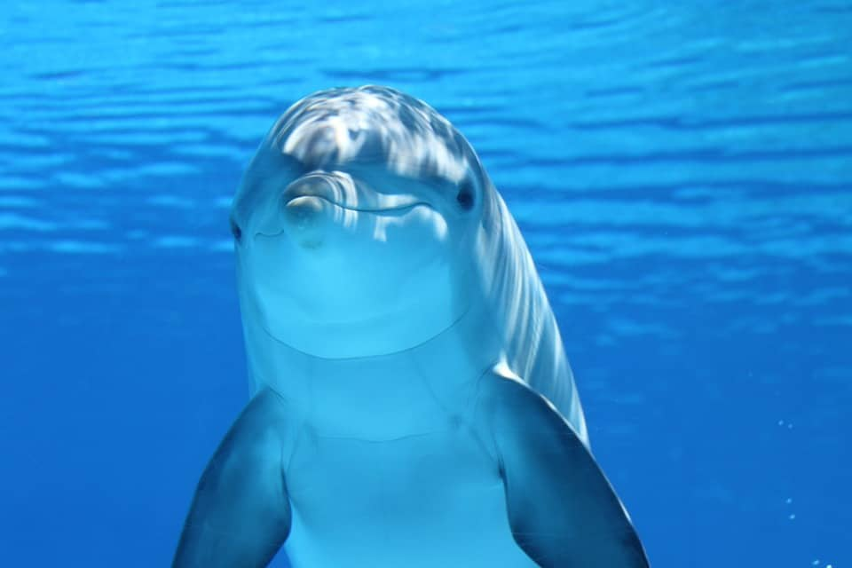 5 Books Of Weird But True Facts About Dolphins For You To Read