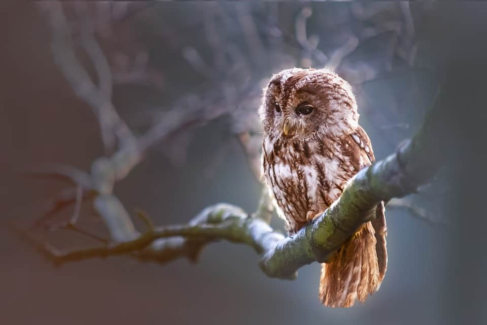Facts About Owls: 6 Books All About These Nocturnal Birds