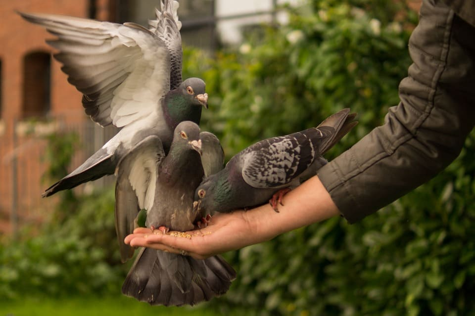Exploring New Things With These 5 Books of Facts About Pigeons