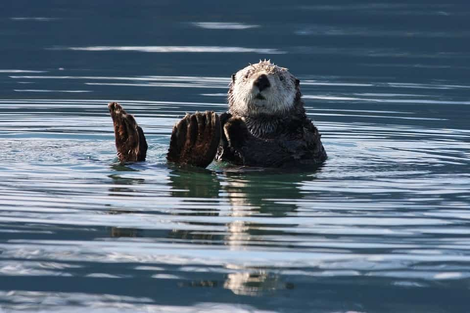 5 Books of Facts About Sea Otters: Learning Them Deeper
