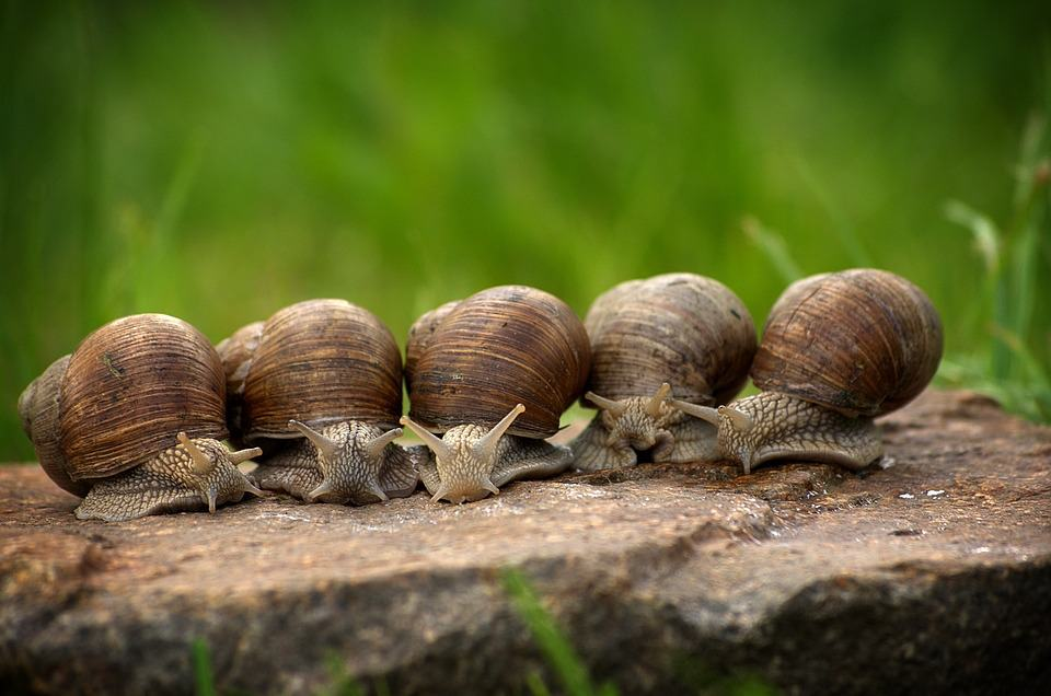 Let Kids Discover About Shelled Gastropods With These 5 Books Of Facts About Snails