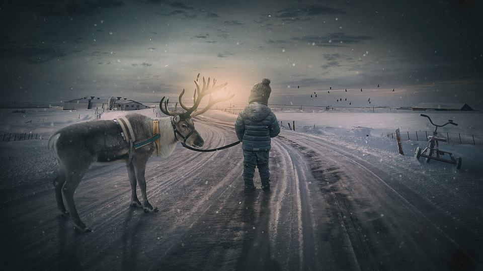 5 Books of Facts About Reindeer: A Member Of The Cervidae Family