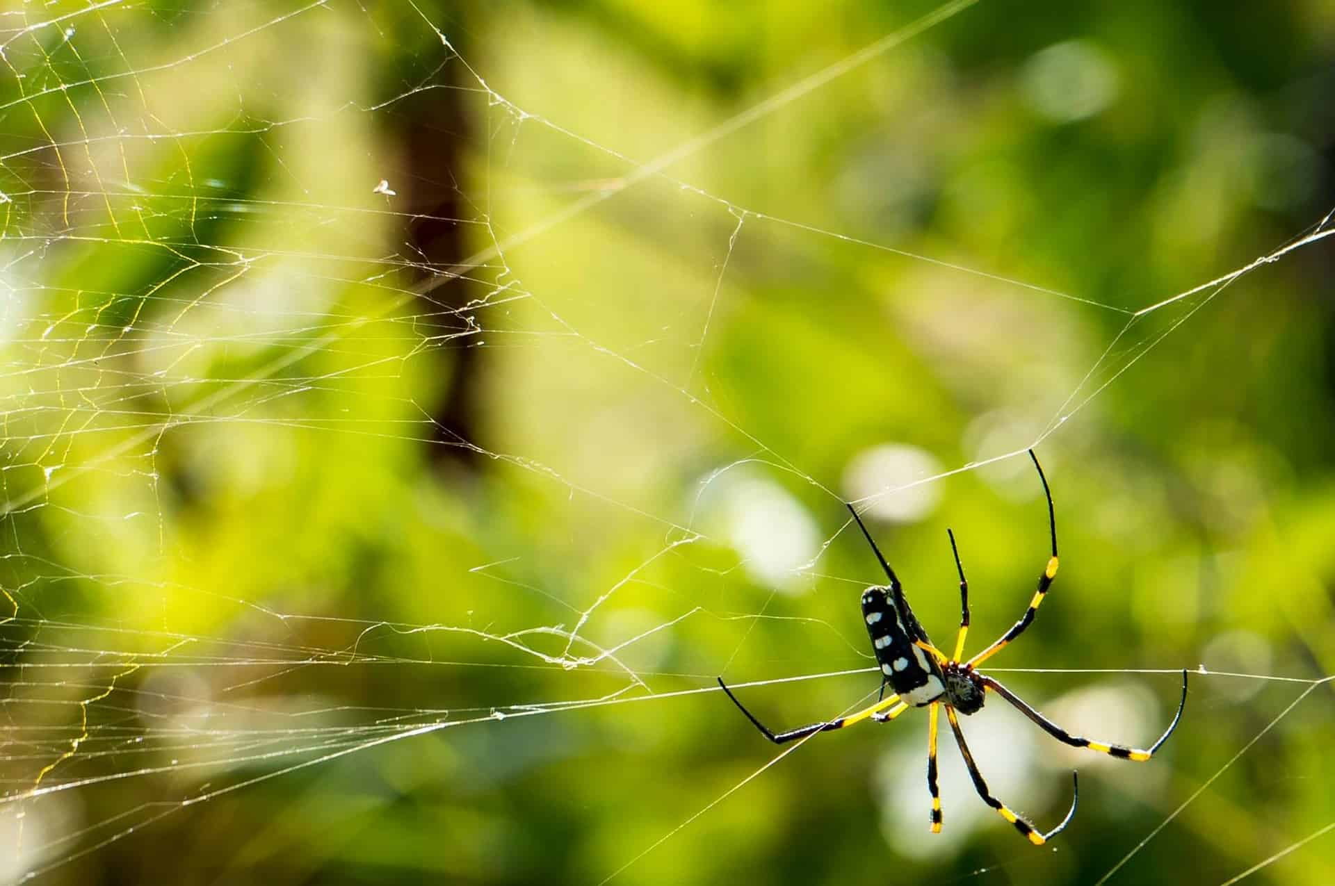 Spiders And Humans