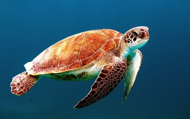 Turtle Types: A Peek Into The World We Know So Little About