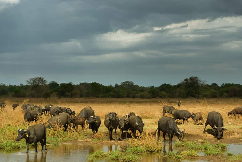 Wild Animals; Why Is It Important To Leave Them Alone?
