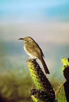 Interesting Facts about Birds