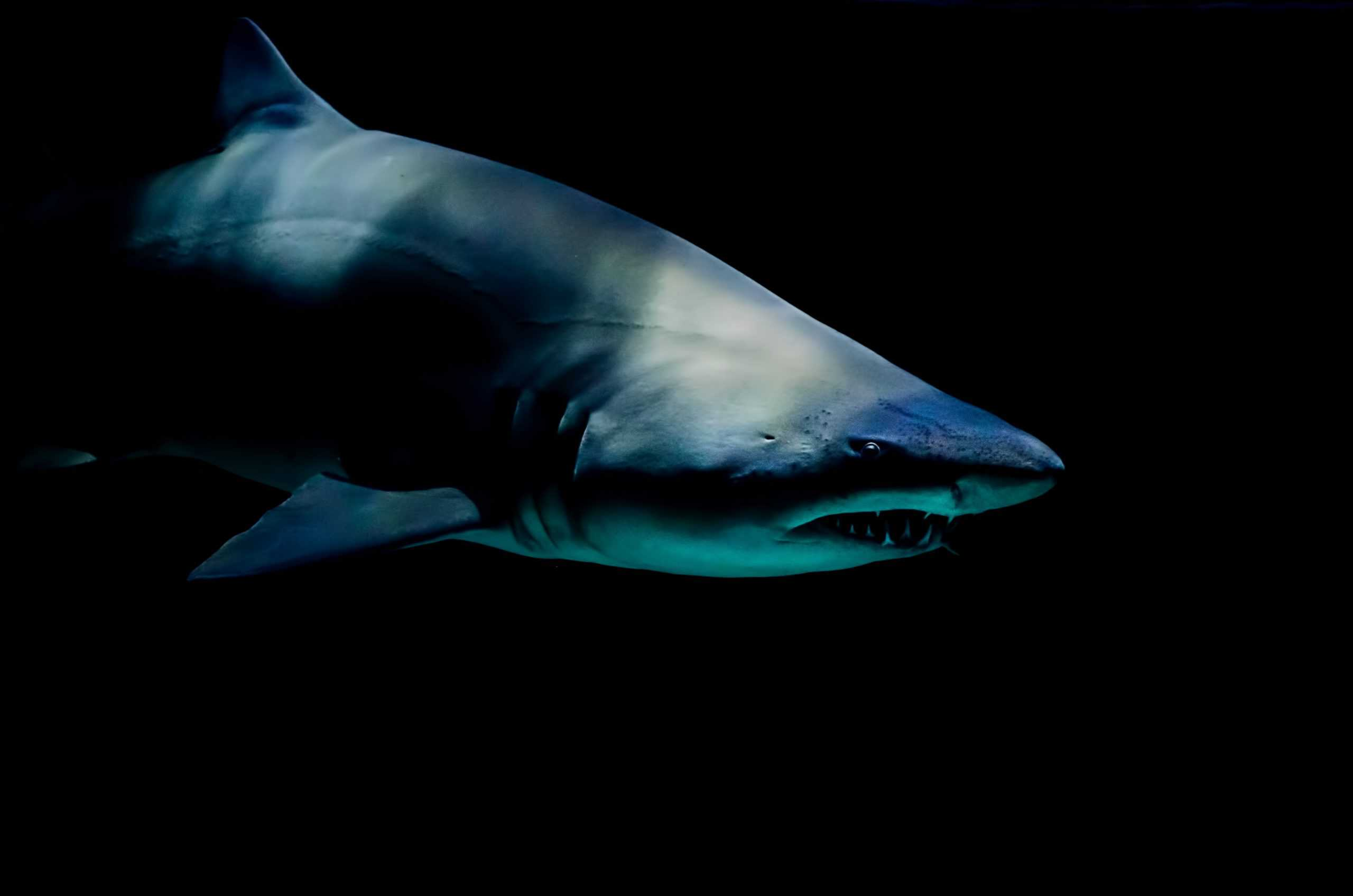 Goblin Shark Facts: Everything About It