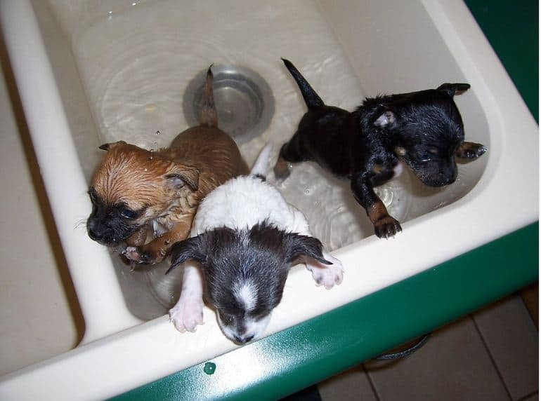 Essentials To Know About Bathing And Brushing Your Pet
