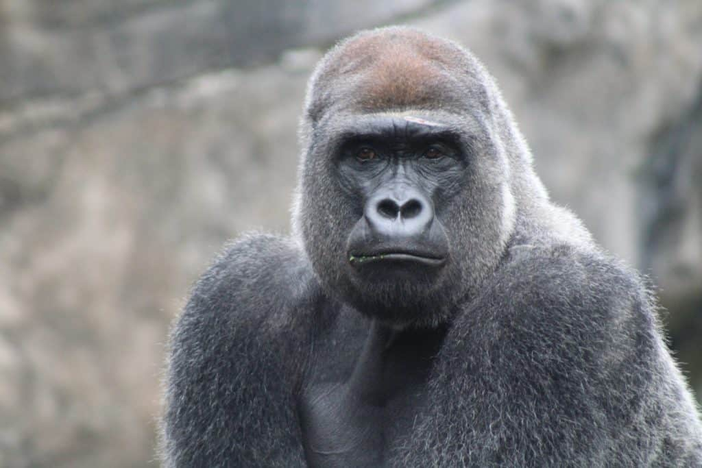 Animal Population Data - Report Finds 60% Of Animals Wiped Out