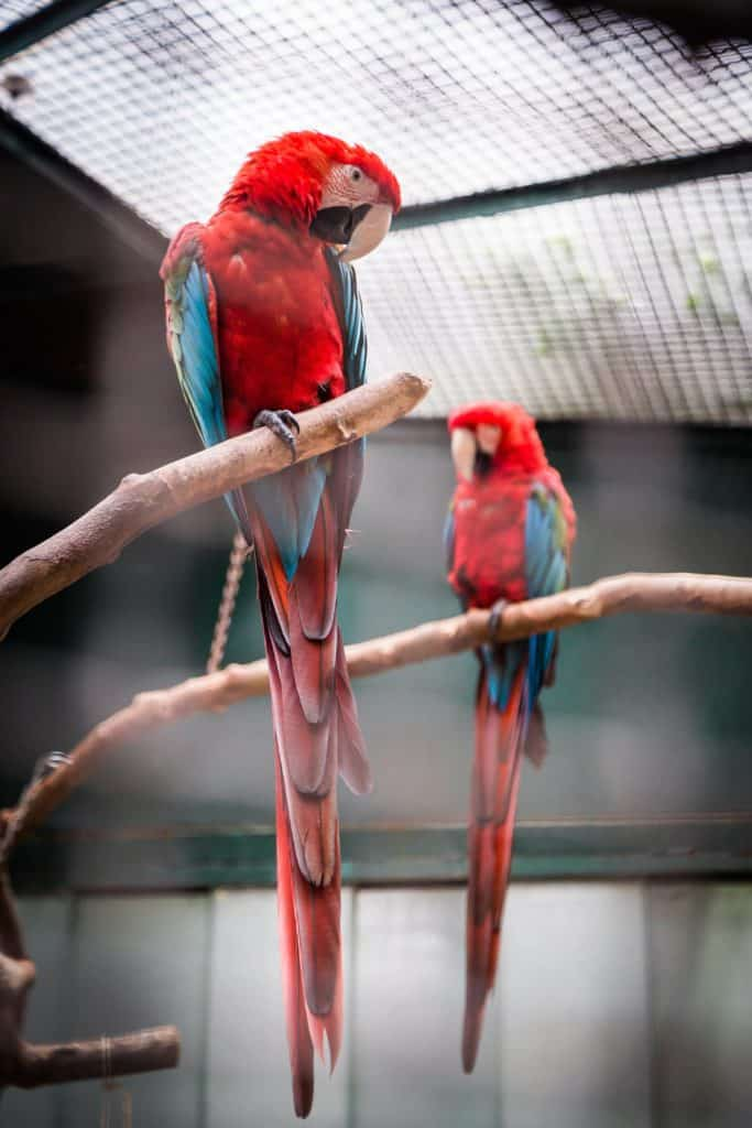 3 Parrot Cage Products You Should Have For Your Pet