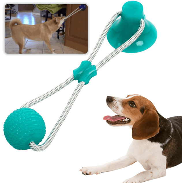 5 Puppy Products You Need For Your Training And Their Hygienic Growth