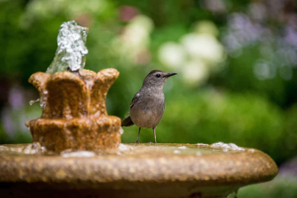 3 Top Reasons Why To Consider Buying Water Fountains For Your Pets