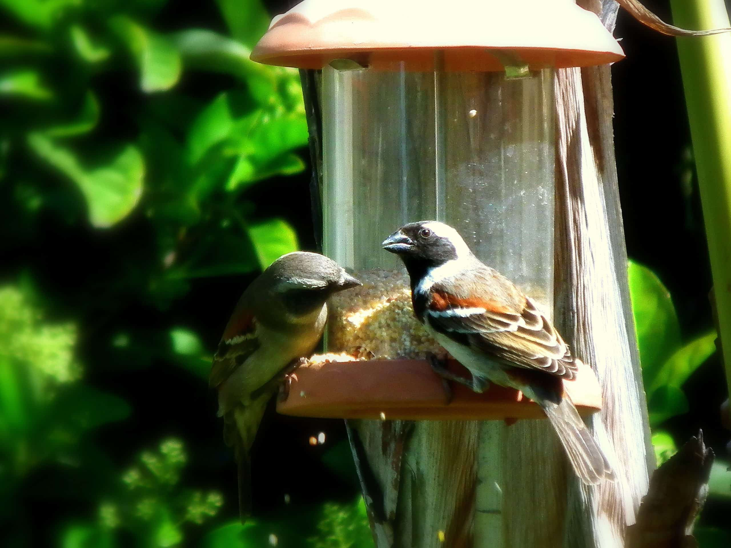 DIY Ideas To Make Bird Feeders To Place In The Garden With Birds