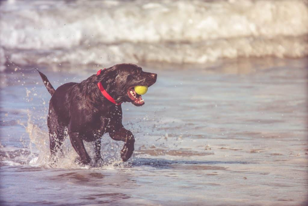 Best Dog-Proof Balls: Ideas Of Ball Made Specifically For Dogs