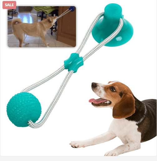 Help Your Pet Buddy With The Best Accessories - Choose From The Top 50 Products