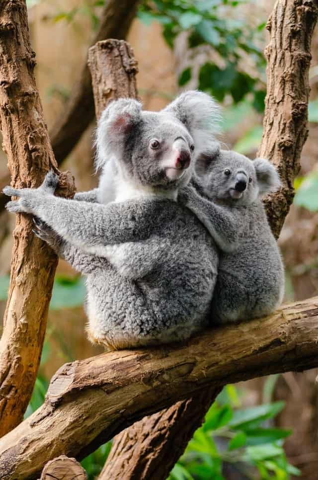 Learn What You Don't Know About Koalas