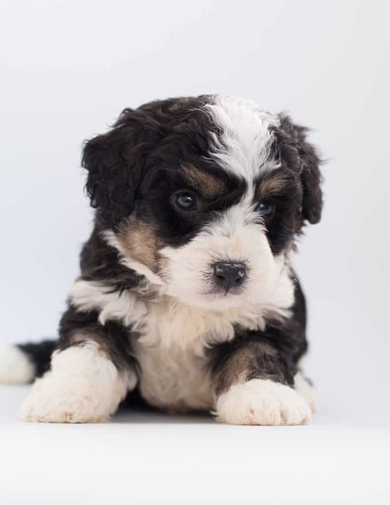 Pets For Kids - What Your Child Needs