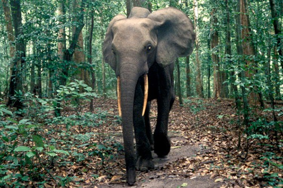 Facts About Elephants That Will Surprise You