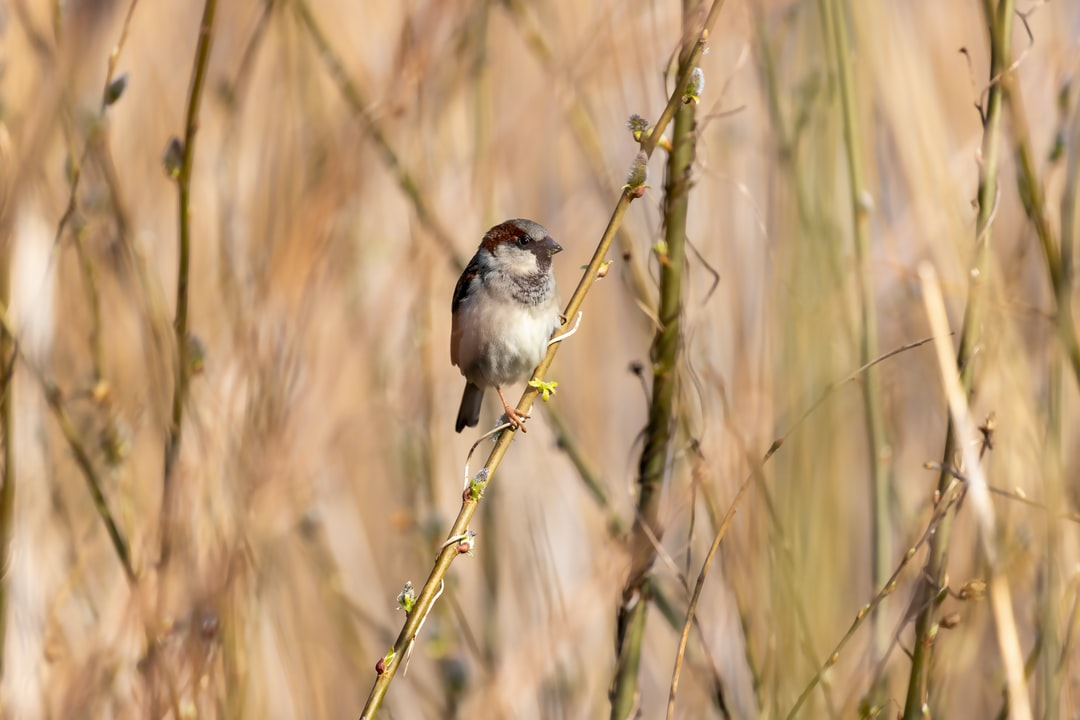 A small bird perched on top of dry grass