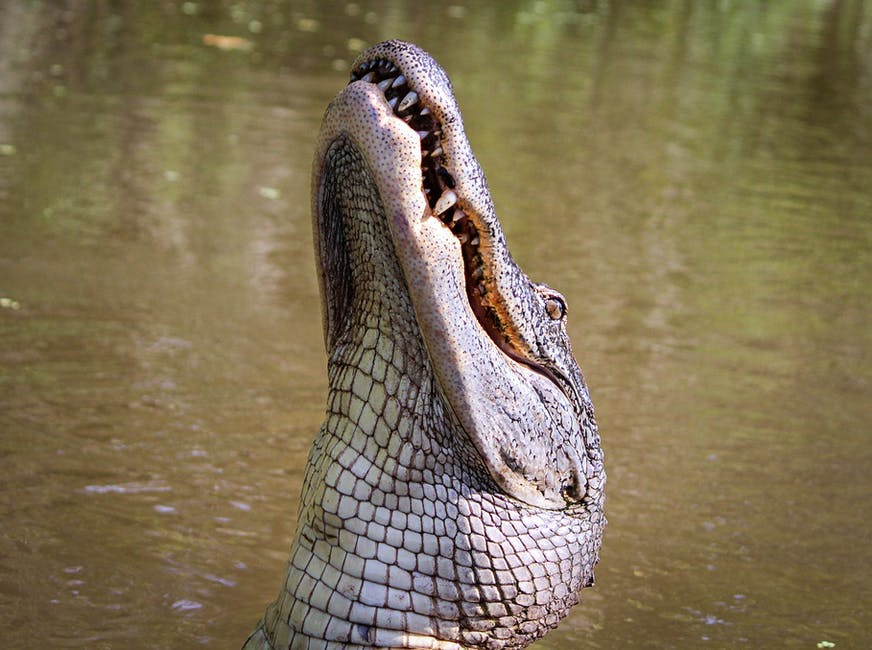 A reptile on a body of water