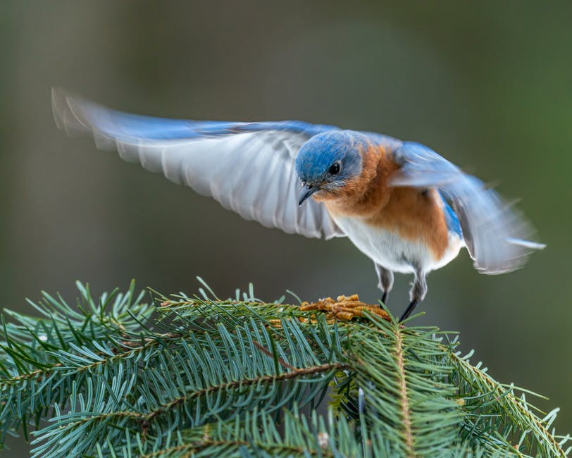A small blue bird perched on a branch
