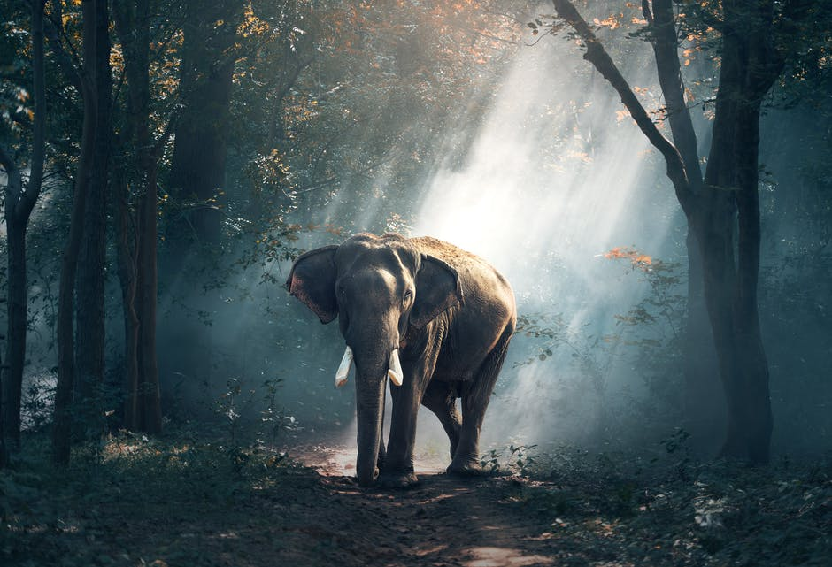 A elephant that is standing in the dirt