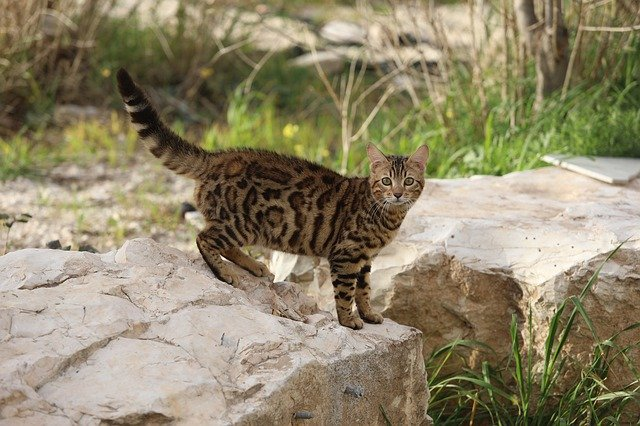 A cat sitting on a rock