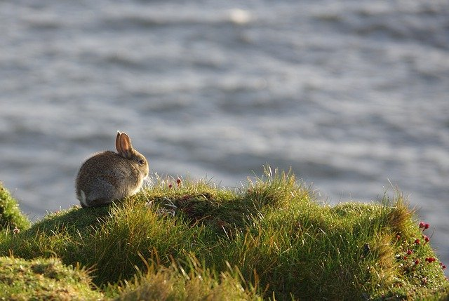 A squirrel standing on a field