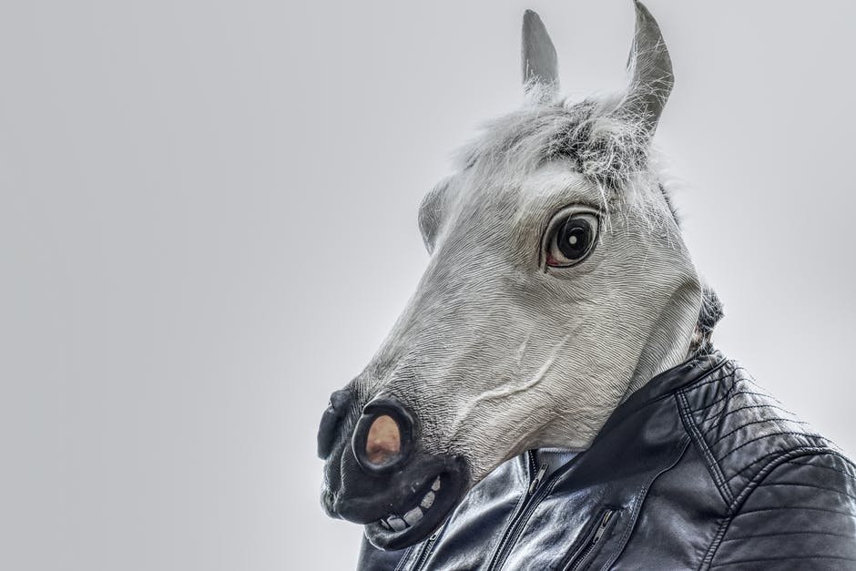 A horse that is looking at the camera