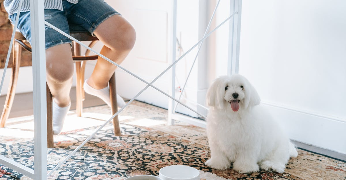 A dog sitting on a table