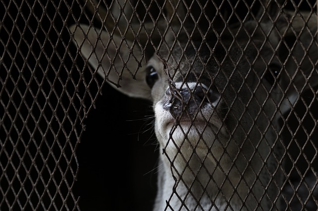 A cat looking through a fence
